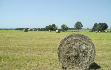 Le Conseil départemental de la Lozère adopte une motion de solidarité avec les agriculteurs et les éleveurs.
